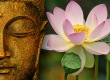 buddha-wallpapers-photos-pictures-lotus